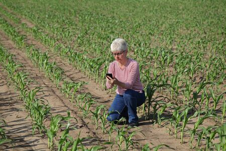 Female farmer or agronomist  inspecting quality of corn plants in field typing to mobile phone and touching plants