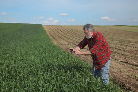 Farmer or agronomist  inspecting quality of wheat plants in field and taking photo using mobile phone