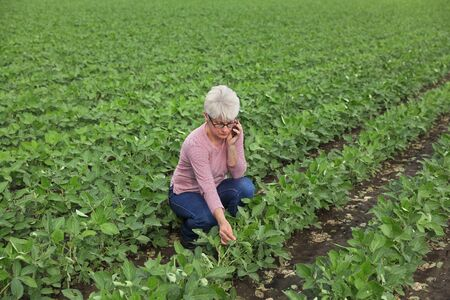 Female farmer or agronomist examine green soy bean plants in field and speaking by mobile phone