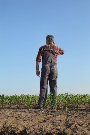 Farmer or agronomist  inspecting quality of corn plants in field and speaking by mobile phone