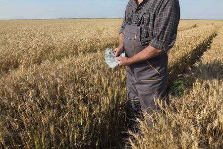 Farmer  holding dollar banknote in wheat field and counting money Stock fotó