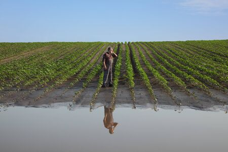 Farmer examining young green sunflower plants in mud and water and speaking by mobile phone, damaged  field after flood