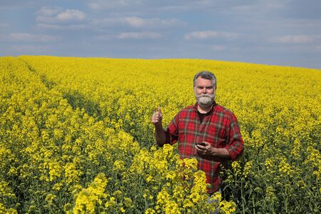 Farmer or agronomist  inspecting quality of canola plants in field andgesturing with thumb up, oil rape in spring