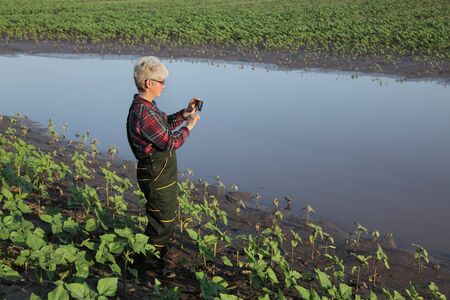 Female farmer inspect young green sunflower plants in mud and water and typing to mobile phone or taking photo, damaged field after flood Stock fotó