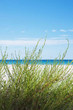 Sea view across the dunes. Tall green grass in the foreground. White sand. Turquoise sea. Blue sky. Paradise picture. Postcard.