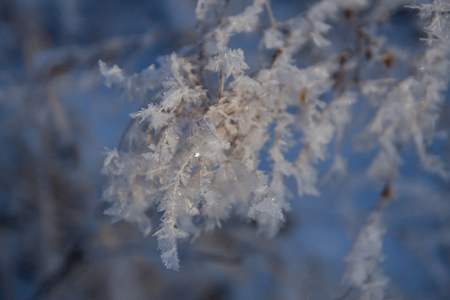Hoar frost on grass on sunset. Abstract background photo