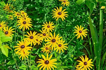Garden flowers against the green grass.