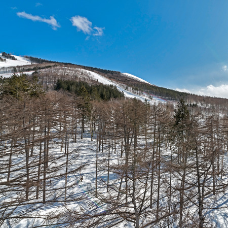 sakhalin: Trees and ski slope in Sakhalin island, Russia.