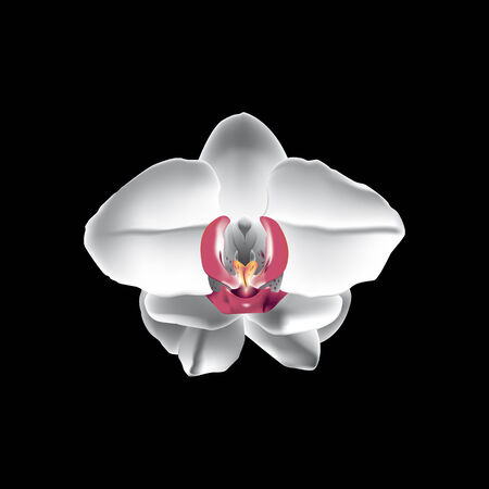 Vector illustration of a white orchid on a black background.