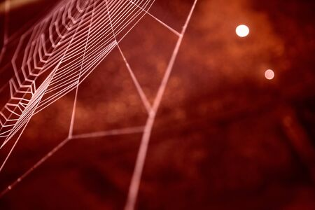 claret: Abstract image in claret of a cobweb in closeup. Stock Photo