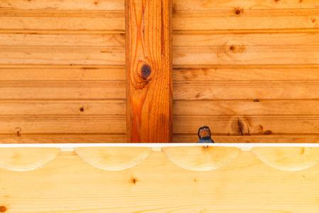 swallow bird: Swallow bird under a wooden shelter. Stock Photo