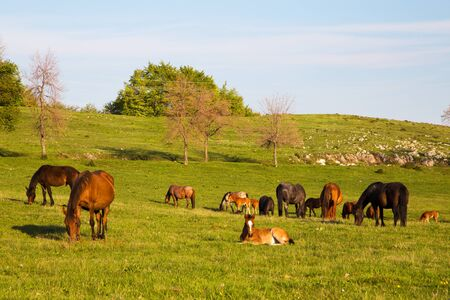 Scenic view of horses out to pasture on a hilly countryside as the sun shines up above