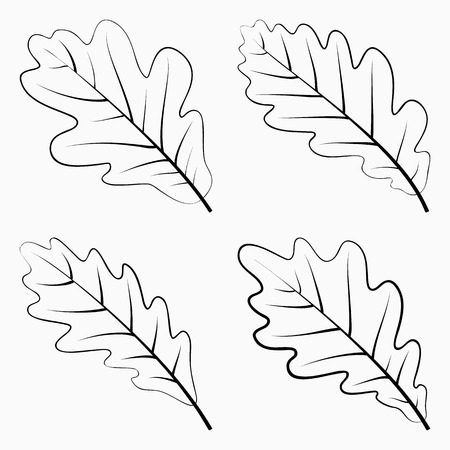 english oak: Set Oak Leaf. Black Silhouette on White Background. Vector