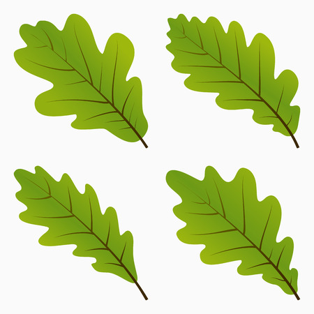 english oak: Set Green Oak Leaf. Silhouette on White Background. Vector