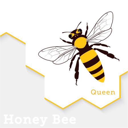 Honey Bee Vector Illustration Isolated on White