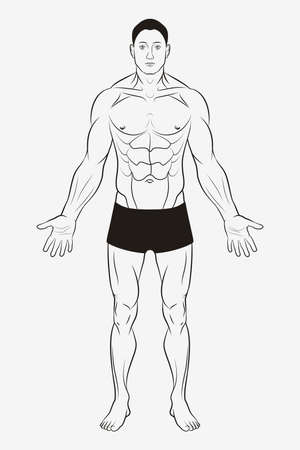 Men's Body and Male Human Anatomy. Shape and Outline Template 矢量图像