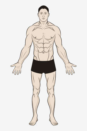 Male Body for Human Anatomy Poster. Simple Drawing and Outline Template 矢量图像