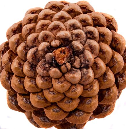 close up of the bottom of a pine cone
