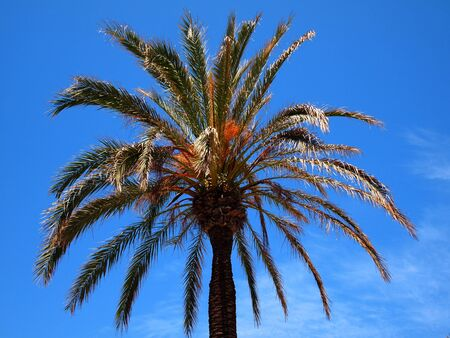 Head of a palm tree with leaves against a blue sky
