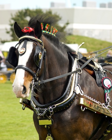 blinkers: Heavy Horse with Brasses