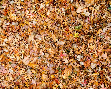 Multi colored Autumn leaves lying on the ground Stock Photo