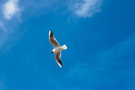 lone seagull against a blue sky