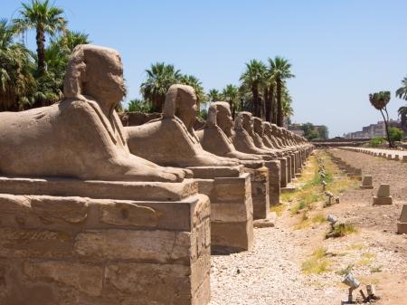 esfinge: Avenida de Esfinge Luxor Egipto Templo Foto de archivo
