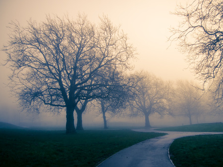 public park on a foggy winters day