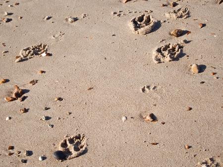 Dog paw prints on wet sand