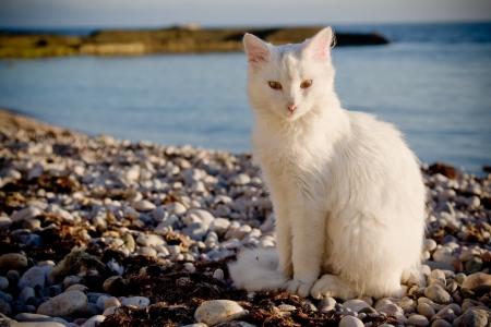 Shot of a white cat on beach Reklamní fotografie