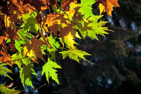 geen: Shot of a geen, red, brown, yellow leaves