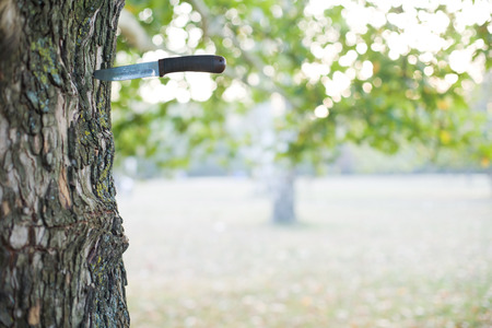 A shot of hunting knife stuck into tree. Stock Photo - 26035997