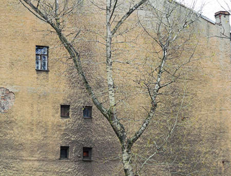 A corroded wall with windows and a tree in a back alley.