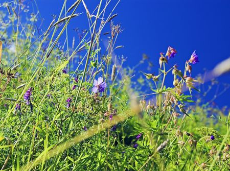Close-up view of wild plants in rural field