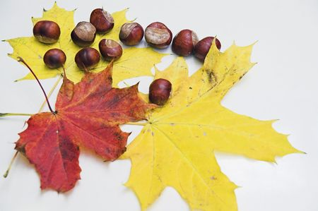 Autumn leaves and chestnuts on white background photo