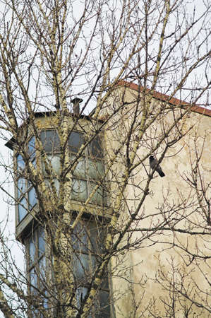 Home Windows - An upper part of a building seen from ground, and a crow perching on a tree nearby. Stock Photo