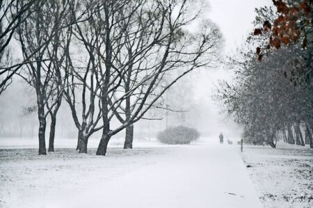 Heavy snowfalling in city park at daytime Stock Photo