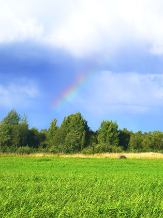 Endless fields with green grass bent with the wind. Birch forest is on the background. The rain is over and the sun is shining. The rainbow is seen in the cleared sky among the clouds.