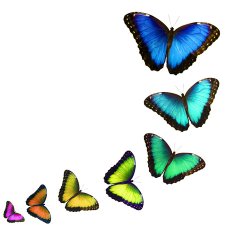 Een ansichtkaart met kleurrijke vlinders geïsoleerd op een witte achtergrond. De vlinders vliegen een voor een in een curve, zien eruit als fladderen, zoomen in en veranderen van kleur. Ruimte voor tekst kopiëren.
