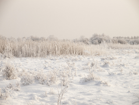 Christmas fairy tale snow scenary. Hillocky fields or swamp. Winter cloudy landscape with snow on the ground and frost on reeds and branches of bushes.