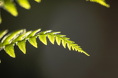 A green leaf of a fern is pictured against neutral grey background