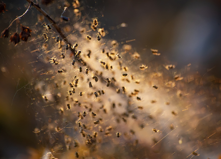 Little spiders in a cobweb nest are lightened with the evening sunlight. Stok Fotoğraf