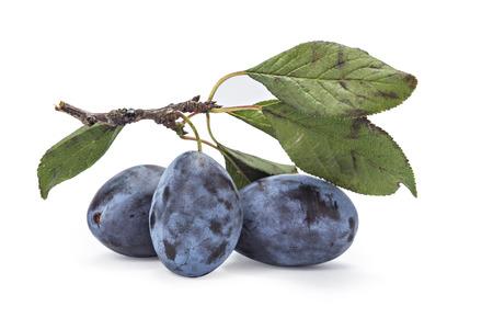 plum: ciruelas maduras frescas en la rama con hojas sobre fondo blanco