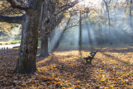 Empty bench in the park and colorful fallen autumn leaves covering the ground, under the sun rays Stock Photo