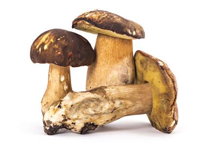 Three fresh ripe Boletus edulis mushrooms isolated on white background