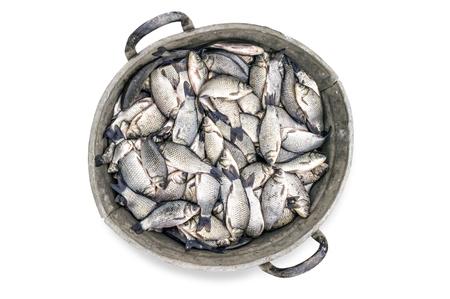 Old tin bucket full of crucian carp fish isolated on white background Stock Photo