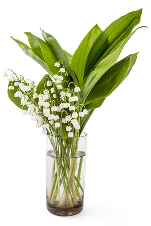 mayflower: Beautiful bouquet of lilies of the valley flowers, Convallaria Majalis, with green leaves in glass on white background Stock Photo
