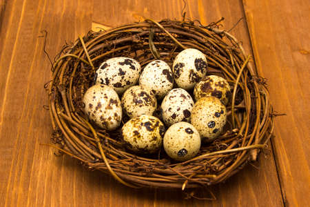 quail nest: quail eggs in the nest on wood background Stock Photo