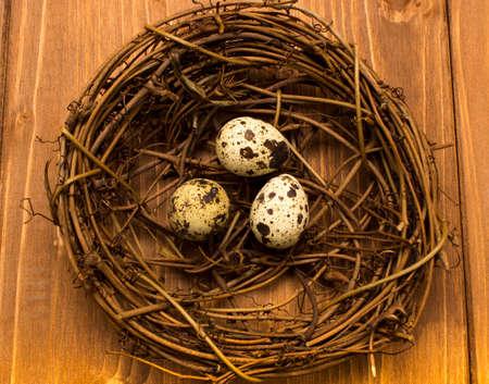 quail nest: quail eggs in nest on wood background Stock Photo