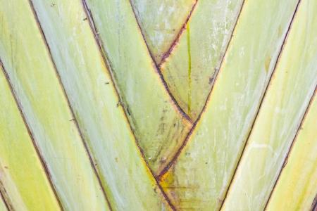 Palmen Textur Hintergrund Lizenzfreie Bilder